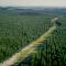 Na confusão da árvore com a floresta